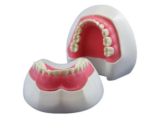 26 зуб