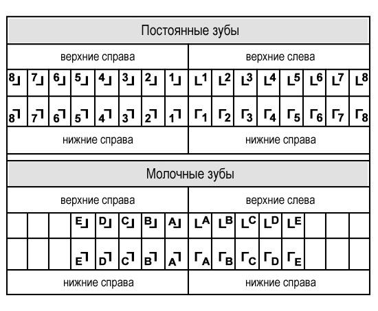 Схема нумерации зубов Зигмонди-Палмера